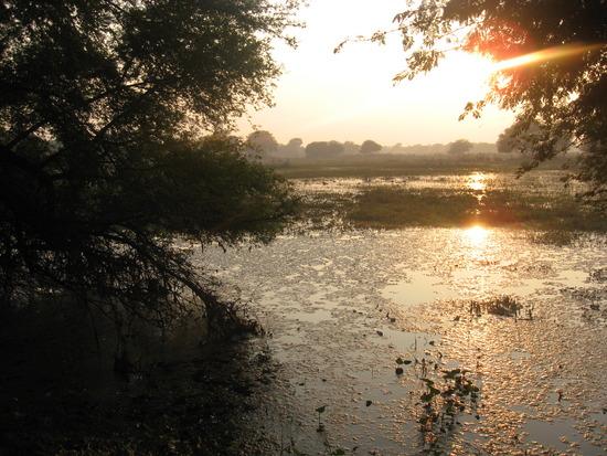 Vườn quốc gia Keoladeo thuộc bang Rajasthan, cách Arga khoảng 50km vế phía Tây. Vườn là một vùng rừng ngập mặn đặc hữu.