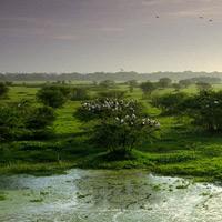 Vườn quốc gia Keoladeo - Ấn Độ