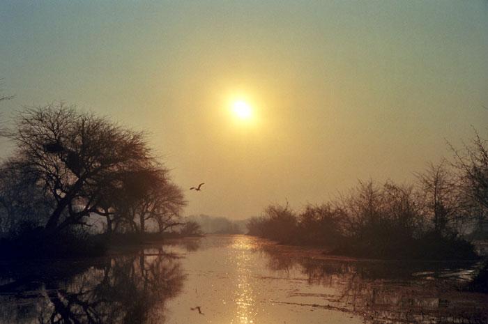 Diện tích toàn bộ vườn Keoladeo là 2.873 ha. Nơi đây là nơi cư trú của 375 loài chim.