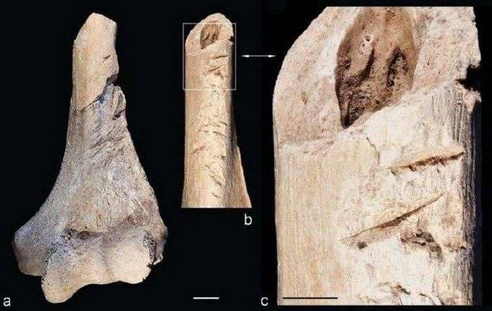 Những mảnh xương được phát hiện trong hố chôn tập thể.