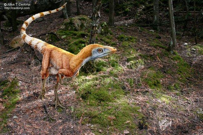Sinosauropteryx.