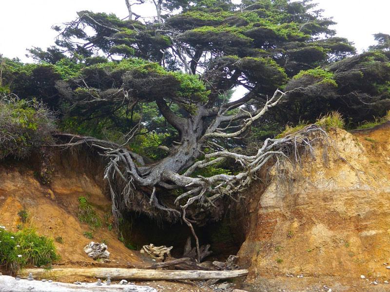 Sức sống mạnh mẽ của cây cổ thụ