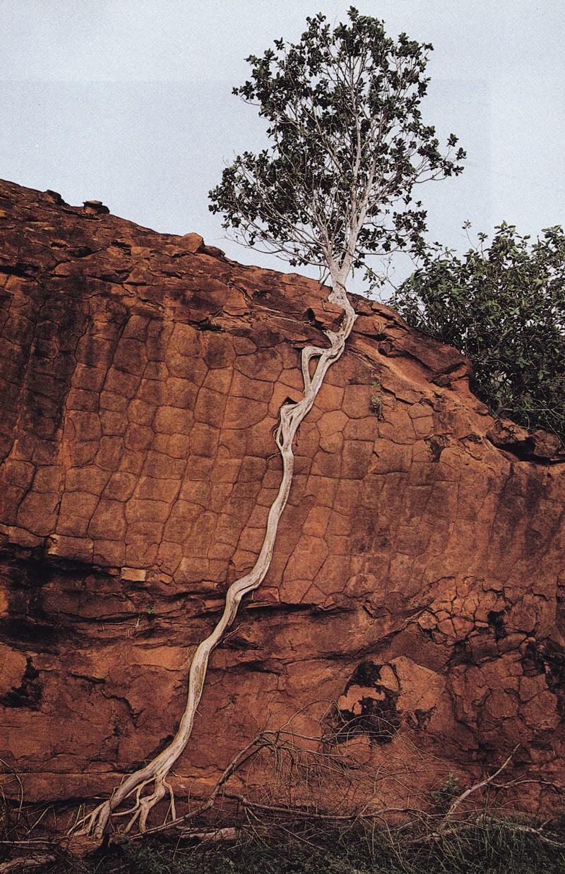 Sự sống vẫn trỗi dậy dù đất có cằn cỗi đến mấy