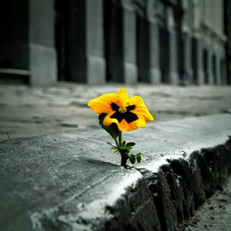 Một đóa hoa vươn lên từ khe hở