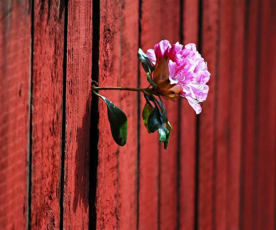 Khắc nghiệt như vậy mà bông hoa vẫn sinh trưởng được