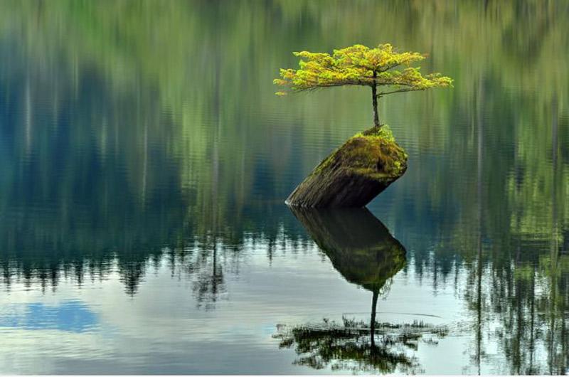 Một cây xanh vươn lên trên thân gỗ mục giữa mênh mông sông nước