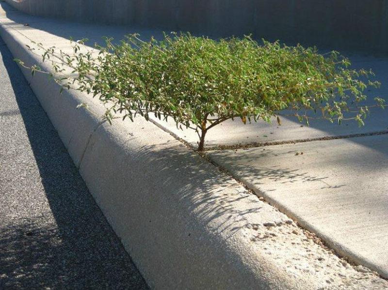 Giữa khe hở của xi măng một cây nhỏ đã lách vào mà vươn lên