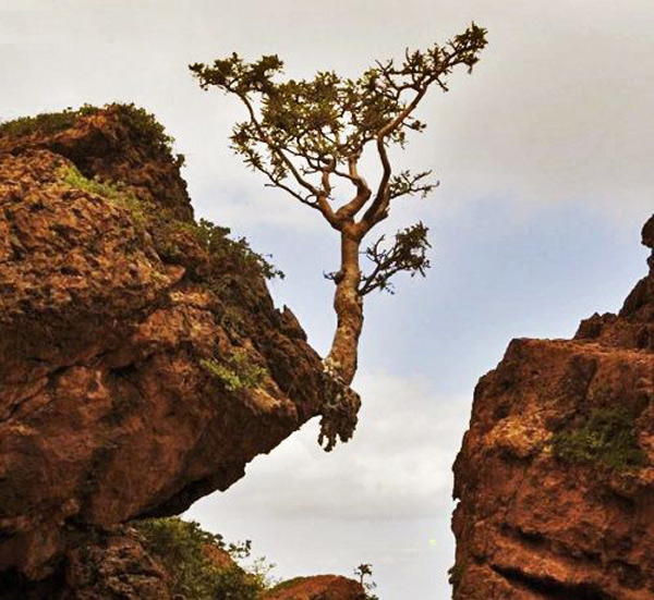 Bức ảnh chụp một cây sống bên vách núi
