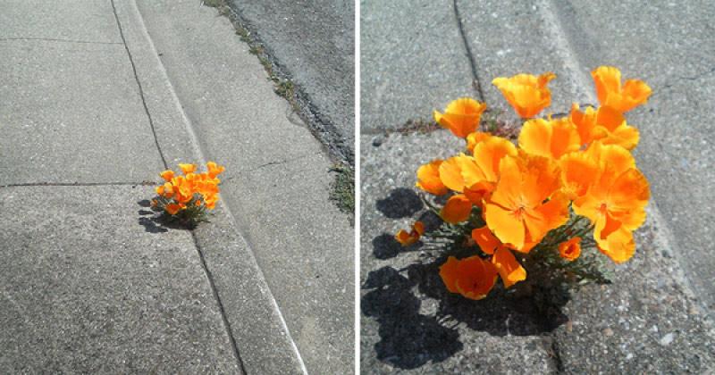 Một bụi hoa mọc được lên từ một kẽ hở của con đường bê tông