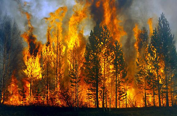 Cháy rừng dữ dội ở Nga là nguyên nhân của việc nóng lên của Trái Đất.