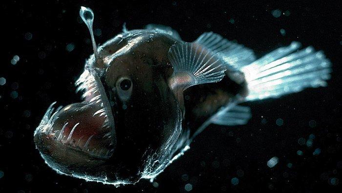 Dưới biển sâu có vô số những sinh vật kì lạ.