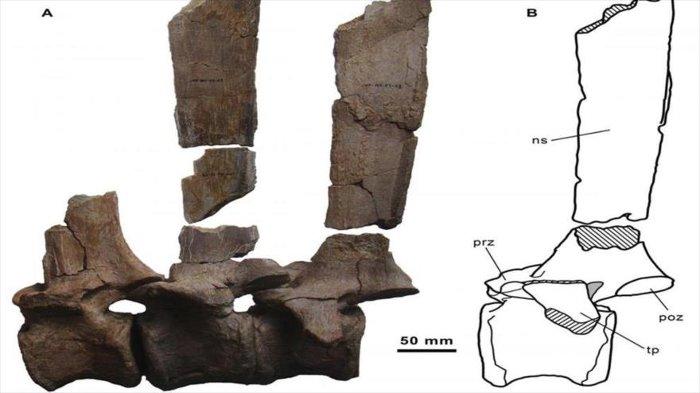 Hóa thạch khủng long tìm thấy tại Tây Ban Nha.