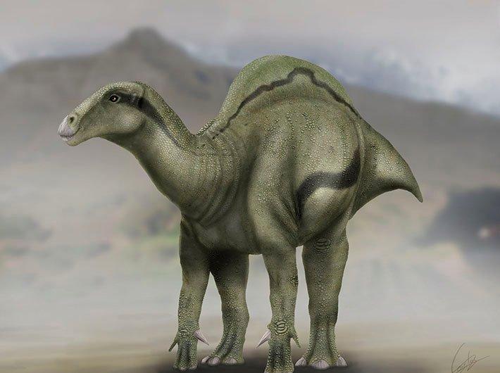 """Loài khủng long này có """"bướu"""" trên lưng như lạc đà."""