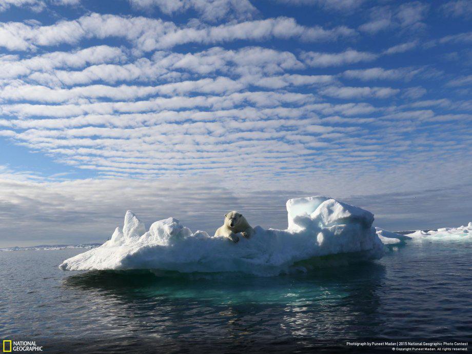 Thế giới đang thu hẹp của tôi - (Tác giả: Puneet Madan). Hình ảnh những chú gấu Bắc Cực đang bơ vơ vì chưa nhận thức được rằng thế giới băng tuyết của mình đã dần bé lại đặt ra câu hỏi về vấn đề môi trường toàn cầu.