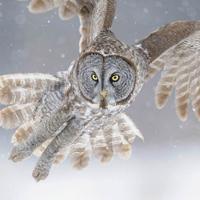 Bộ ảnh động vật hoang dã ấn tượng tham dự cuộc thi National Geographic 2015