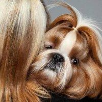 Vì sao chó và chủ thường giống nhau?