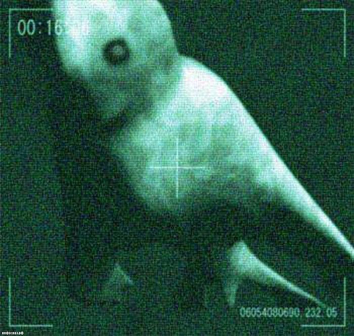 Hình ảnh của Nigen - quái vật được cho là giống người xuất hiện ở Nam Cực.