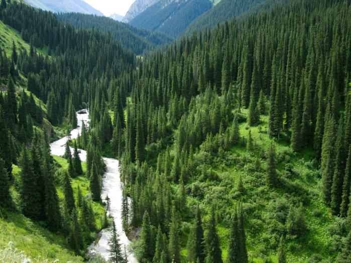 Còn cây thông cao nhất thế giới còn sống được phát hiện tại dãy núi Sierra Nevada thuộc bang California, Mỹ.