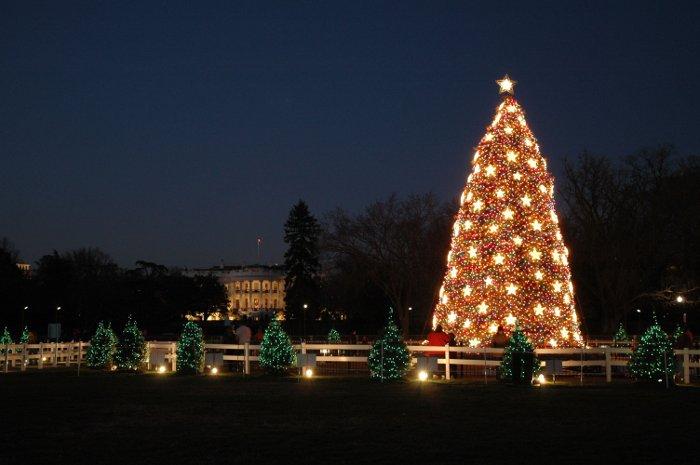 Cây thông là thứ không thể thiếu trong mỗi mùa Giáng sinh.