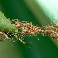 """Những tập tính """"quái gở đến đáng sợ"""" của côn trùng"""