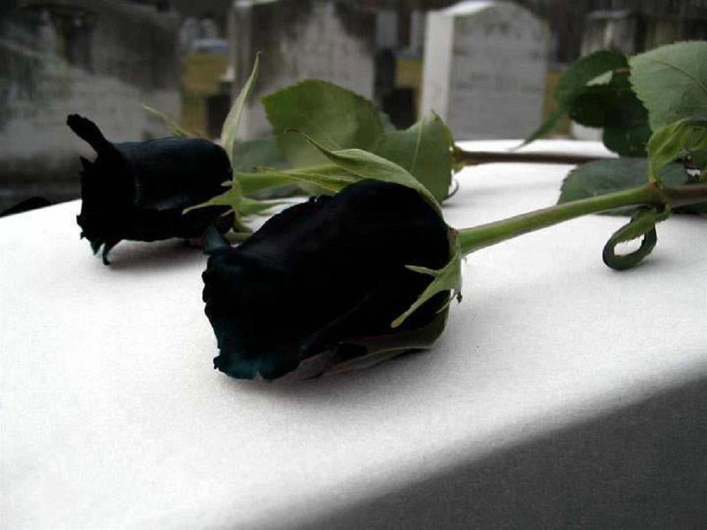 Những người Thổ ở địa phương xem bông hồng này là biểu tượng của sự huyền bí, hy vọng và đam mê, cũng như sự chết chóc và điềm xấu.