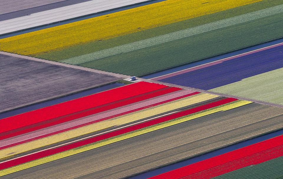 Hàng triệu bông hoa đua nở tại vườn hoa lớn nhất thế giới Keukenhof tại Hà Lan