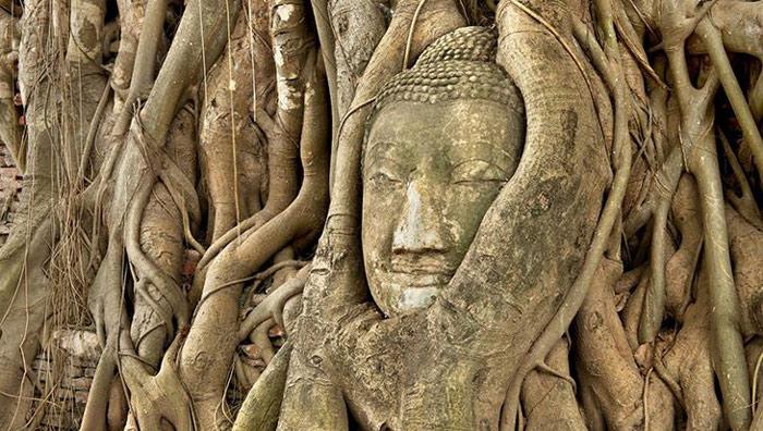 Ayutthaya còn được coi là một Công viên di sản văn hóa bởi khắp nơi màu xanh của cây cổ thụ và thảm cỏ mượt mà xen giữa những phế tích kiến trúc