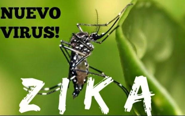 Muỗi Aedes truyền Virus Zika.