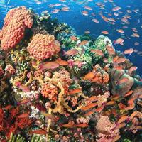 Công viên tự nhiên Tubbataha Reefs Marine
