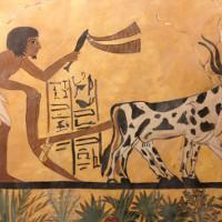 Con người làm hỏng môi trường từ 6.000 năm trước