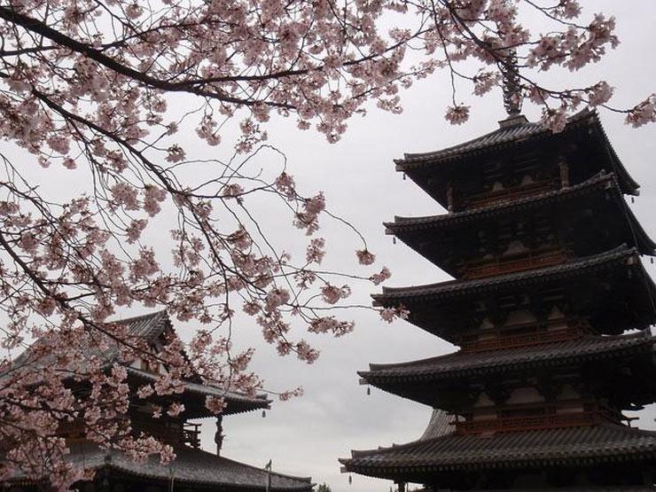 Có thể nói chùa Horyuji là một bảo tàng cổ vật lớn của Nhật Bản với nhiều di sản được xếp hạng bảo vật quốc gia.