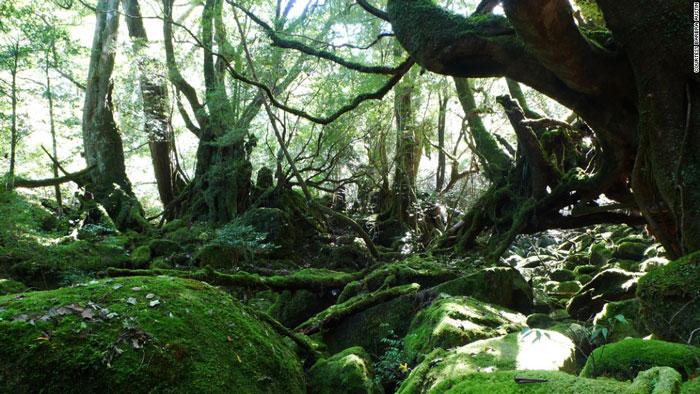 Đảo Yakushima là một đảo nhỏ có diện tích 501 km2 ngằm ngoài khơi về phía Nam của huyện Kagoshima, tỉnh Kyushu.