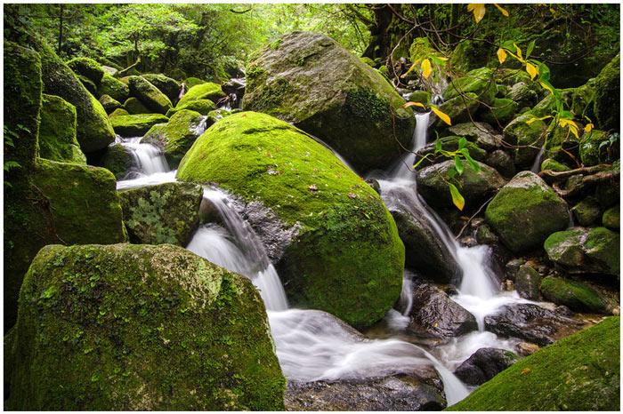 Hệ thực vật của rừng cũng ghi nhận hàng trăm loài hoa trong đó có đến chục loài hoa chỉ tồn tại trong khu rừng này.
