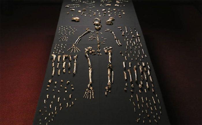 60 nhà khoa học, đứng đầu là nhà khảo cứu cổ sinh vật nhân chủng học người Mỹ Lee R. Berger công bố phát hiện về tổ tiên mới của loài người là người Homo Naledi sau khi tìm thấy hài cốt tại một hang động ở Nam Phi.