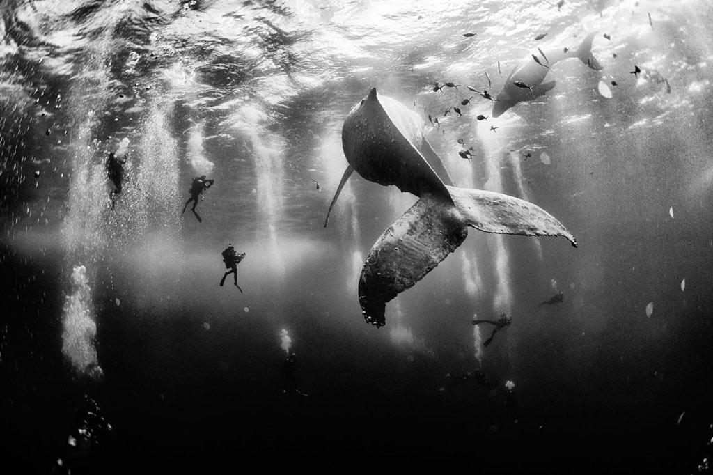 Bức ảnh đoạt giải nhất cuộc thi ảnh du lịch của National Geographic chụp cảnh các thợ lặn bơi gần một chú cá voi lưng gù. Đây là bài dự thi của nhiếp ảnh gia Anuar Patjane Floriuk (Mexico) thực hiện gần Roca Partida, một hòn đảo ngoài khơi bờ tây Mexico.