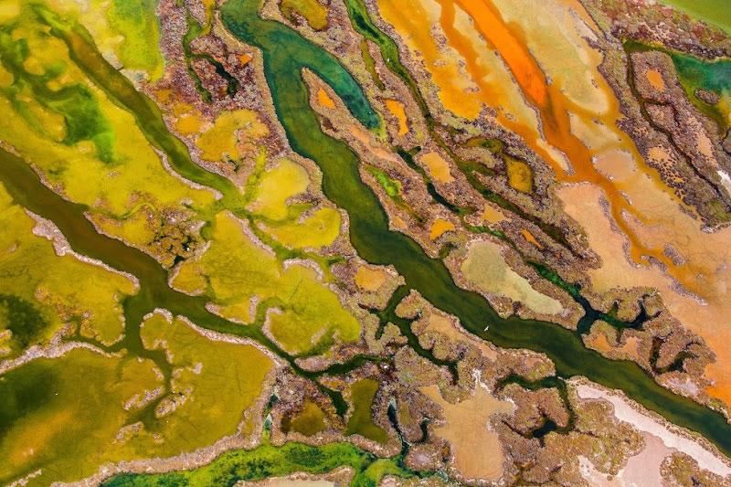 Công viên quốc gia Bahía de Cádiz giống như một bức tranh ghép từ các mảng màu của đầm lầy, lau sậy, đụn cát và bờ sông.