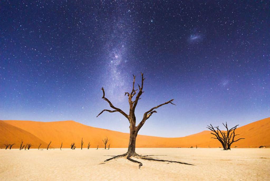 """Những cây camelthorn ở đây được cho là đã 900 năm tuổi, nhưng không phân hủy do môi trường quá khô""""."""