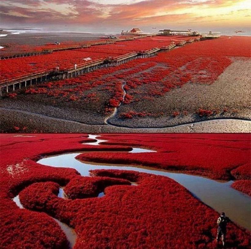 Bãi biển đỏ Panjin, Trung Quốc