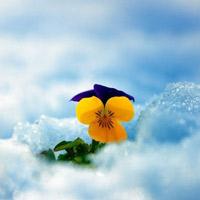 Đông ấm áp với rực rỡ sắc hoa trong tuyết
