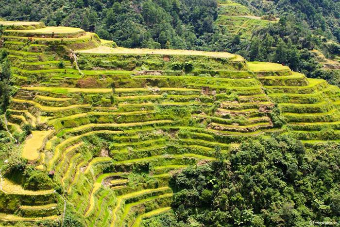 Các ruộng bậc thang tại Philippine Cordilleras được tìm thấy trên các núi thuộc tỉnh Ifugao