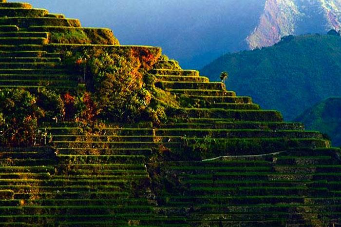 Những ruộng bậc thang này được xây dựng chủ yếu bằng tay vào thời kỳ còn rất ít công cụ hỗ trợ