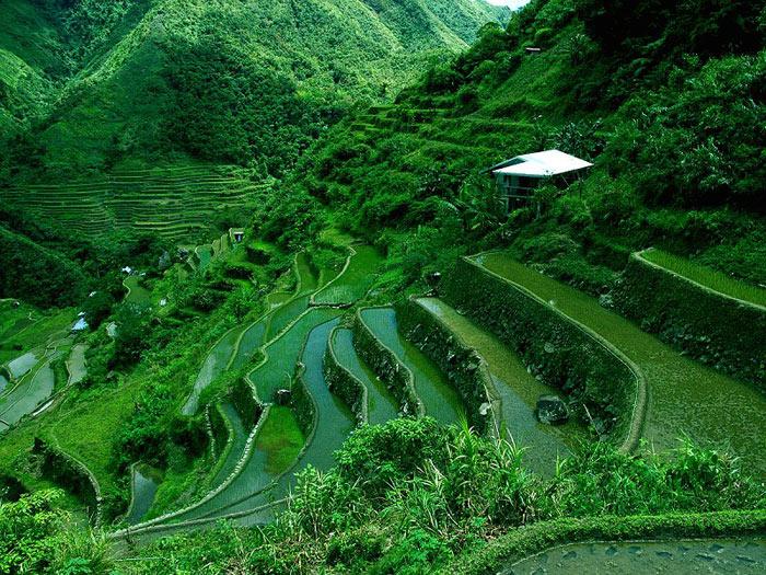 Các ruộng bậc thang này có độ cao 1.500 mét so với mặt nước biển và có diện tích 10.360 km2.