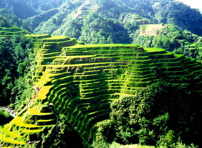 Các ruộng bậc thang tại Philippine Cordilleras là một công trình nhân tạo cổ có lịch sử từ 2000 đến 6000 năm