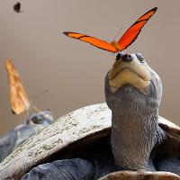 """5 sự thật """"kỳ cục"""" sẽ thay đổi cách nhìn nhận của bạn về thế giới động vật"""