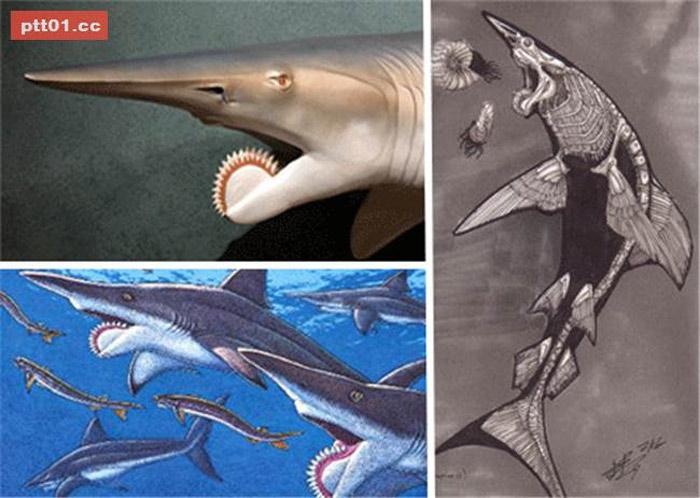 Cá mập Helicoprion xuất hiện ở các đại dương vào cuối kỷ Cacbon, cách đây khoảng 310 triệu năm và tuyệt chủng vào đầu kỷ Triat.