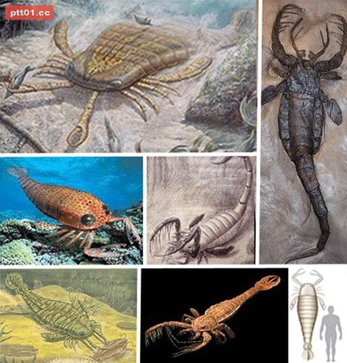 Loài bò cạp biển khổng lồ này có chiều dài 2,5m, tồn tại từ 390 triệu năm trước, trước cả thời khủng long, đã tuyệt chủng từ nhiều niên đại.