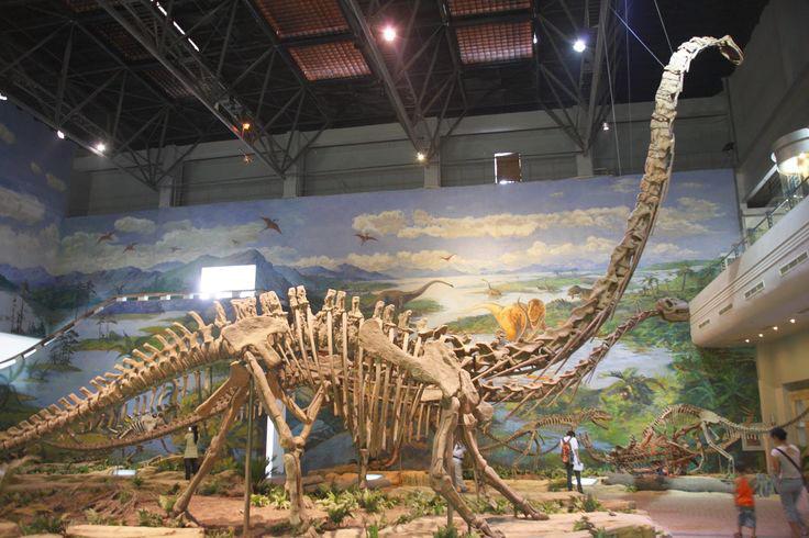 Hầu hết các loài sống từ 145 đến 150 triệu năm trước, thuộc tầng Tithonia, cuối kỷ Jura.