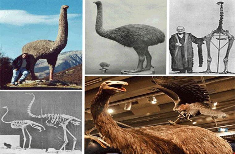 Khủng điểu hay Đà điểu khổng lồ là loài chim to lớn thuộc Bộ Đà điểu đã tuyệt chủng. Thuộc nhóm chim chạy, khủng điểu không thể bay mà chỉ có thể chạy. Chúng sống trên một hòn đảo thuộc New Zealand vào khoảng đầu thế kỉ thứ 19.