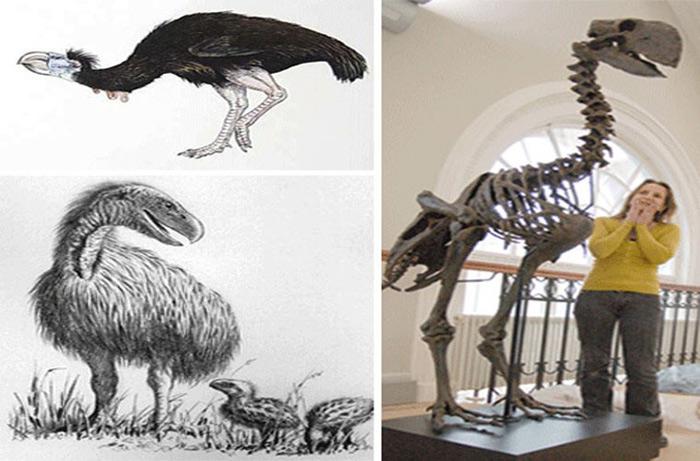 Gastornis là một chi tuyệt chủng của chim bay lớn sống trong thế Paleocen muộn và Eocen kỷ nguyên của Tân sinh. Các hóa thạch của loài chim được tìm thấy ở Anh, Bỉ, Pháp và Đức và Bắc Mỹ.