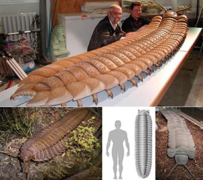 Rết tiền sử sống trong kỷ nguyên Carbon, tuyệt chủng trong kỷ nguyên Permi, có niên đại khoảng 300 triệu năm trước Công nguyên. Theo phân tích khảo cổ thì rết thời tiền sử có khoảng 121 chân, mỗi chân dài đến 76cm và con lớn có thể đạt đến trọng lượng nửa tấn.